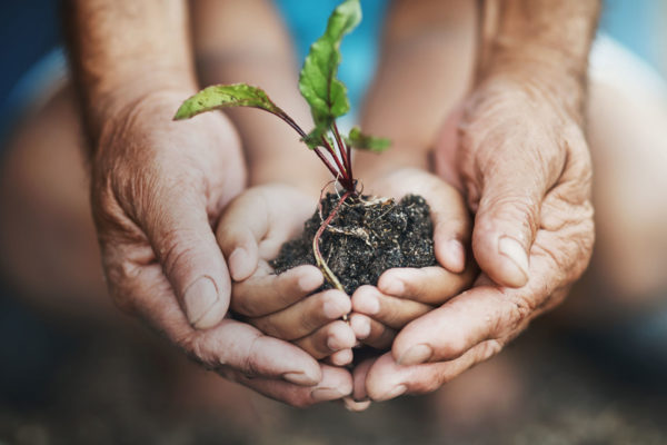 Hands holding a seedling plant